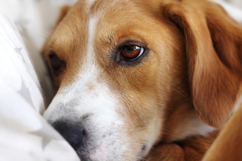 Unter beweglichen knubbel hund haut hat Hund hat